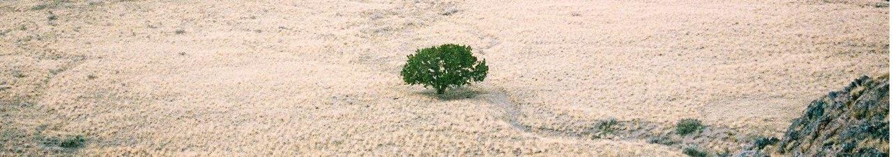 Unregistered Land solicitors: A bush in a desert
