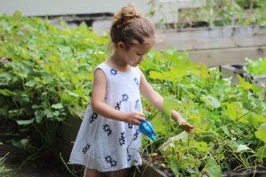 coronavirus: gardening